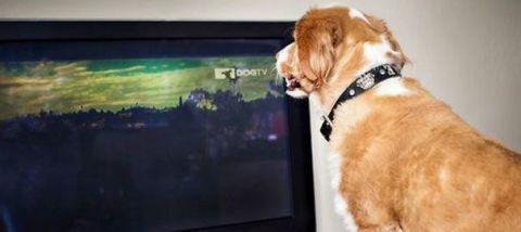 dog-tv-1_5133410