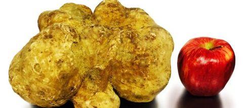 la-plus-grosse-truffe-blanche-vendue-a-new-york_5167057
